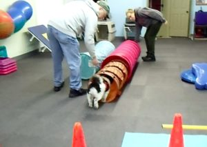 Sasha plays in the gym with Mom and Dad