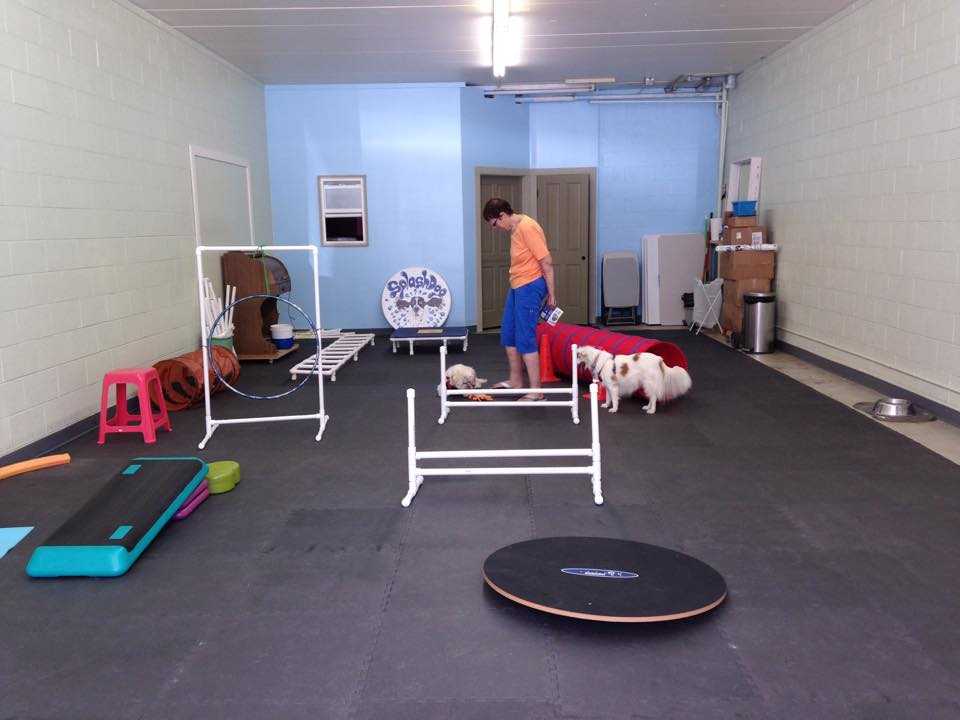 SplashDog Canine Gym